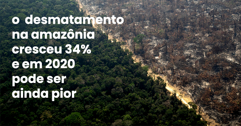 Entidades ambientalistas e partidos políticos vão ao STF por volta imediata de plano contra desmatamento